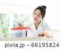 研究をする白衣の若い女性 66195824