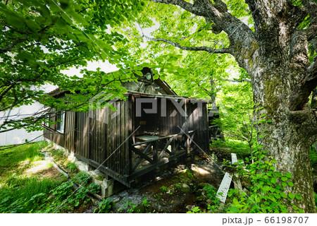春の新緑の明るいブナの森の温泉露天風呂 66198707