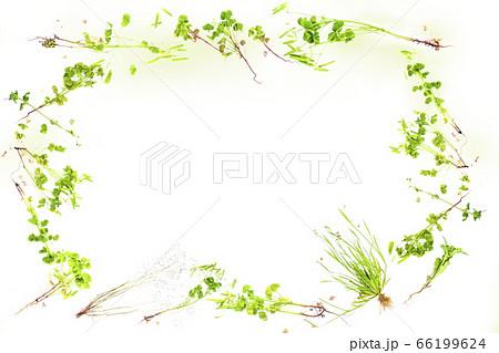 草花のかわいい背景フレーム_白背景 66199624