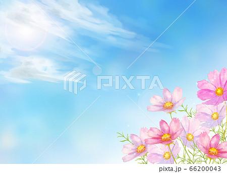 青空とコスモス水彩画 66200043