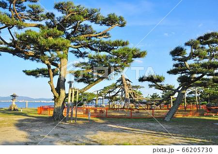滋賀県大津市 唐崎神社境内の松と琵琶湖対岸 66205730