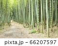 【岐阜県可児市】かぐや姫の散歩道(木曽川渡し場遊歩道) 66207597