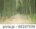 【岐阜県可児市】かぐや姫の散歩道(木曽川渡し場遊歩道) 66207599