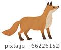 キツネ 狐 きつね イラスト 水彩 素材 66226152
