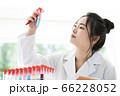 女性 白衣 研究 実験 試験管 66228052