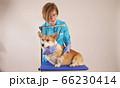 female veterinarian examines a dog in a veterinary clinic 66230414