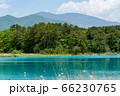 初夏の五色沼自然探勝路の風景 弁天沼と湖畔の木々 福島県北塩原村 66230765