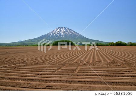 初夏の北海道倶知安町で残雪の羊蹄山と耕された畑の畝の風景を撮影 66231056