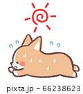 太陽と熱中症コーギー 66238623