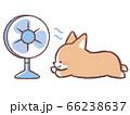 扇風機にあたるコーギー 66238637