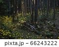 【夏イメージ】ヒメボタルの乱舞 66243222