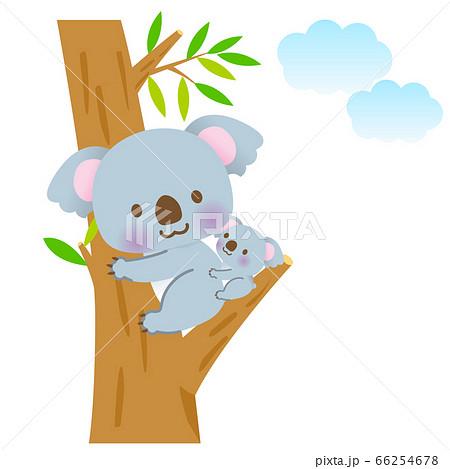 木の上で見つめ合うかわいい仲良しコアラの親子 66254678