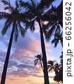 ヤシの木のシルエットと透明感のある夕焼け 66256042