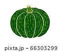 カボチャのイラスト 66303299