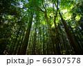 若草山原始林のマイナスイオン 66307578
