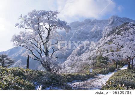 西日本最高峰の百名山石鎚山1982m 66309788