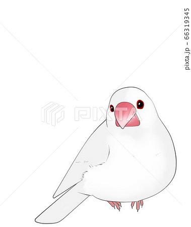 文鳥 66319345