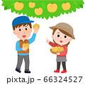 梨狩りする男女 イラスト 66324527