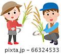 稲刈りをする男女 イラスト 66324533