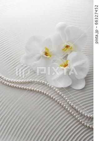 胡蝶蘭と白砂 66327452