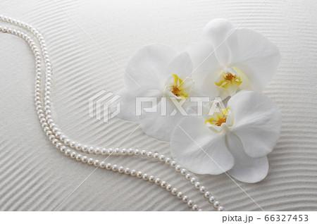 胡蝶蘭と白砂 66327453
