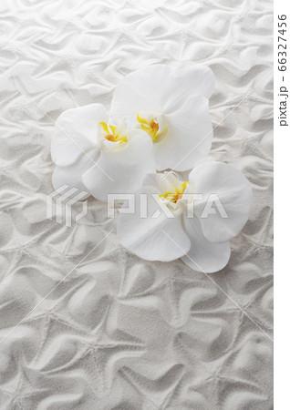 胡蝶蘭と白砂 66327456