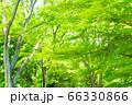 緑のイメージ 66330866