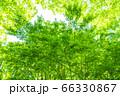 緑のイメージ 66330867
