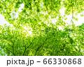 緑のイメージ 66330868