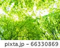 緑のイメージ 66330869