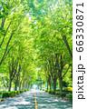 木漏れ日の入る街路樹と道 66330871