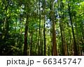 奈良奥山ドライブウエイ・若草山原始林34 66345747