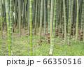 【岐阜県可児市】かぐや姫の散歩道(木曽川渡し場遊歩道) 66350516