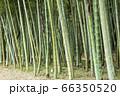 【岐阜県可児市】かぐや姫の散歩道(木曽川渡し場遊歩道) 66350520