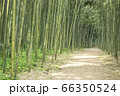 【岐阜県可児市】かぐや姫の散歩道(木曽川渡し場遊歩道) 66350524
