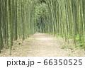 【岐阜県可児市】かぐや姫の散歩道(木曽川渡し場遊歩道) 66350525