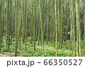 【岐阜県可児市】かぐや姫の散歩道(木曽川渡し場遊歩道) 66350527