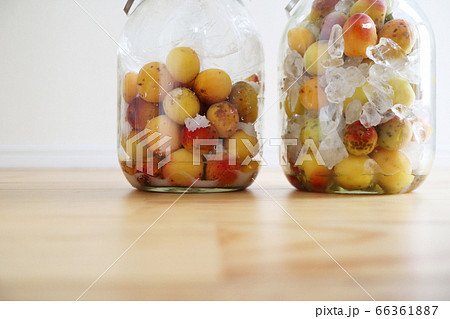 自家製の梅干しと梅シロップの保存 66361887