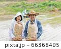 田植えと米収穫イメージ 66368495
