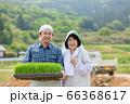 米を作る農家の夫婦 66368617