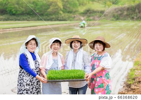 農家を支える農家の女性達 66368620