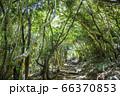木漏れ日が降りそそぐ森のトンネル 福岡県糸島市 芥屋の大門公園 66370853