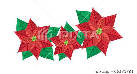 ポインセチア 花 植物 イラスト 66371731