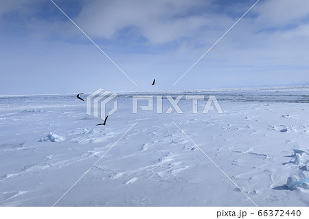 砕氷船おーろら号から見る網走沖の流氷 66372440