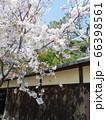 春の鎌倉を散策中に出逢ったソメイヨシノと趣のある塀 66398561