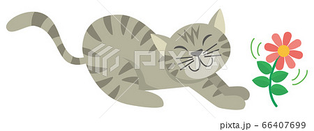 ネコ 猫 ねこ トラネコ とら猫 アメリカンショートヘア 動物 イラスト 66407699
