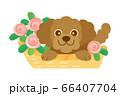 犬 いぬ イヌ プードル トイプードル ペット dog 動物 イラスト 66407704