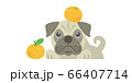犬 いぬ イヌ dog パグ pug ペット 動物 イラスト 66407714