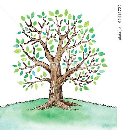 緑の葉の木のイラスト 66412729
