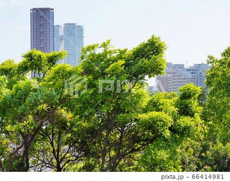 新緑とアイランドシティの高層ビル 66414981